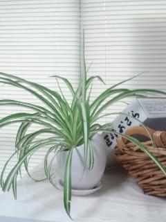 事務所の観葉植物